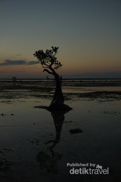 Selain sunset nan indah, pantai ini memiliki keunikan dengan banyaknya mangrove yang