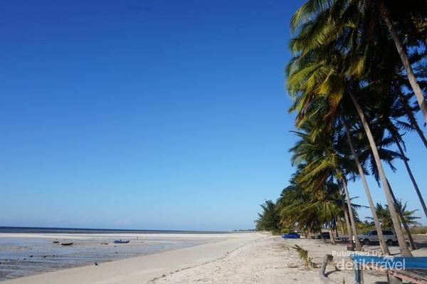 Deretan pohon kelapa di sisi pantai melambai tertiup angin kencang di sore hari