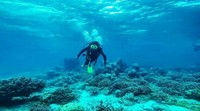 Diving di Wakatobi