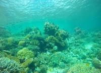 Bawah laut Wakatobi