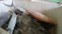 Aneka ikan laut segar hasil tangkapan nelayan bisa dibeli dan dinikmati disini