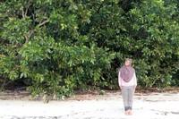 Pulau Peucang dengan pasir putih dan hutan bakaunya