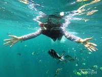 Snorkeling di Pulau Pahawang