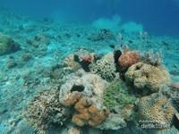 Keindahan Karang di Pulau Kelor