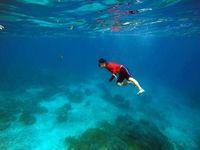 Kamu bisa free dive karena kejernihan airnya