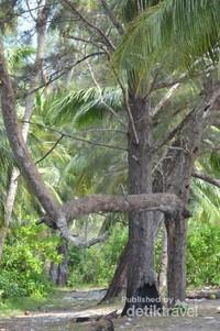 Pohon cemara dan kelapa dipinggir pantai membuat betah berlama-lama bersantai disini