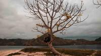 Berfoto di salah satu pohon di Pulau Kelor yang instagrammable.