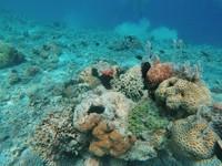 Keindahan bawah laut Pulau Kelor