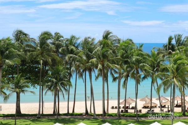 Deretan pohon kelapa menari indah