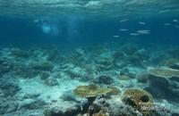 Pantai jernih nan indah ini berada di Gili Trawangan. Saking jernihnya, wisatawan dapat melihat karang di dasar laut saat berdiri di tepi pantainya.