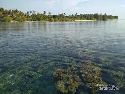 Tak Perlu Snorkeling untuk Lihat Terumbu Karang di Karimunjawa