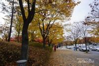 Saat mulai menelusuri Seoul Forest, kita sudah dimanjakan dengan pemandangan guguran daun bewarna nan menyenangkan.