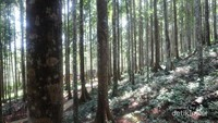 Kawasan ekowisata ini ditanami oleh PT Inhutani II sejak tahun 1976