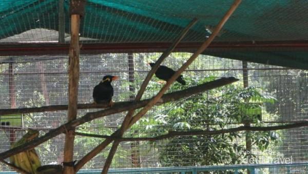 Di sini traveler bisa menjumpai burung beo yang juga dilindungi