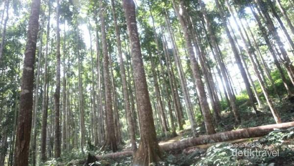 Walaupun hutan, namun suasana di dalamnya cukup terang, masih terdapat sinar matahari yang menerangi dari selah pohon