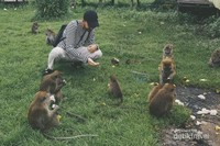 Bermain bersama monyet