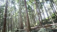 Terdapat deretan pohon meranti putih yang dapat ditemui di kawasan ini