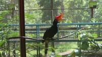 Tidak hanya pohon meranti, di kawasan ini bisa ditemukan penangkaran burung dilindungi seperti beo dan julang mas