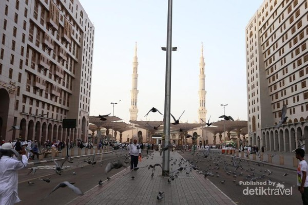 Di depan Masjid Nabawi juga terdapat banyak Burung Dara lho. Burung ini relative jinak dan beberapa jamaah umroh, sehabis sholat biasanya menyapa ramah burung-burung dara ini sambal memberinya makan
