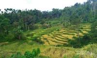 Terasering yang ada di Desa Malasari.