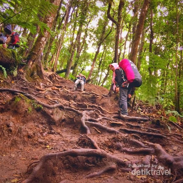 jalur pendakian yang berupa akar pepohonan