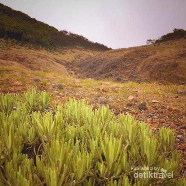 ladang rumput surya kencana