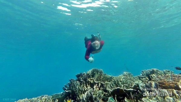 Bawah laut Pantai Jikomalamo di Ternate  tak pernah membuat bosan.