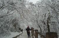 Pesona Gunung Emei di musim dingin laksana winter wonderland. Dimana semua dahan,ranting berwarna putih tertutup salju. Cantik.
