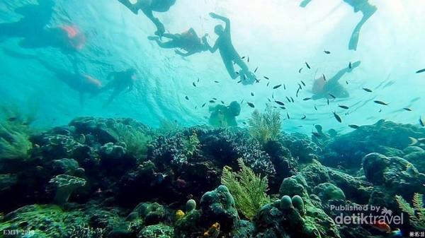 Ramai-ramai menikmati keindahan bawah laut Halmahera Selatan.
