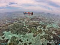Surga bawah laut Pulau Widi, dari laut yang dangkal hingga tebing vertikal, semua dihiasi terumbu karang.