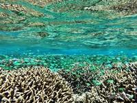Kepulauan Guraici, memiliki hamparan terumbu karang yang banyak dihiasi berbagai ikan-ikan karang nan rupawan.
