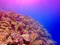 Terumbu karang warna-warni dan air laut yang jernih, adalah pesona utama surga bawah laut Halmahera Selatan.