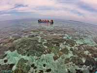 Terumbu karang dan laut jernih