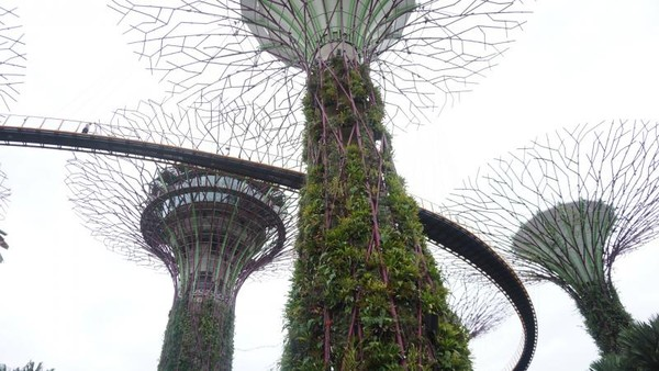 View dari bawah Garden by the bay