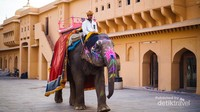 Keliling dengan menggunakan gajah di Amer Fort