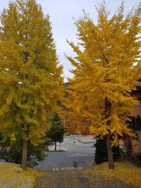 The Garden of Morning Calm - South Korea (Saat Autumn)
