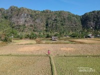 Rammang-Rammang terhampar luas dan megah. Merupakan karst terbesar ketiga di dunia dengan luas 45000 hektar.