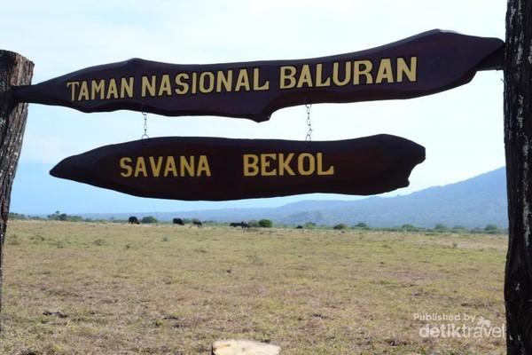 Taman Nasional Baluran, Savana Bekol