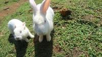Kelinci di tempat ini sangat jinak dan tidak takut dengan pengunjung yang datang