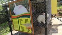 Ada berbagai macam jenis kelinci di tempat ini, salah satunya adalah kelinci anggora