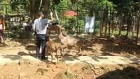Di sini traveler bisa bermain dan memberi makan rusa secara langsung