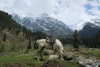 Pegunungan Himalaya yang ditutupi salju, dapat dilihat dari Desa Aru