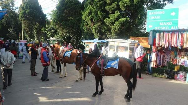 Di Lembang Weekend Market terdapat juga kuda tunggang untuk berkeliling