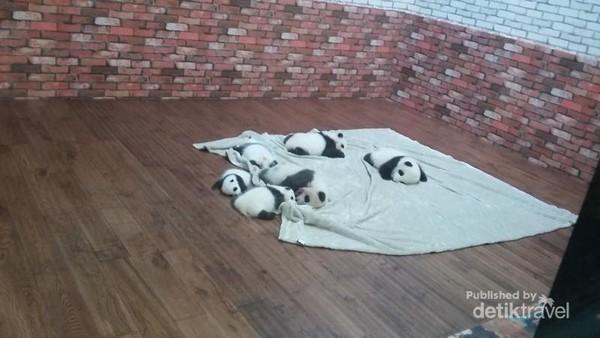Bayi-bayi panda yang diletakkan di ruangan khusus