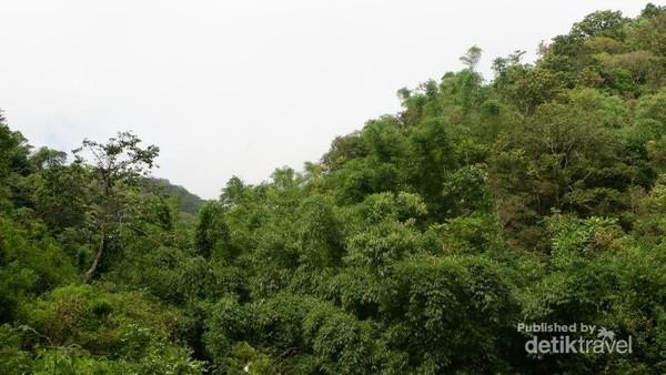 Rimbunnya pepohonan sepanjang perjalanan ke Coban Rais