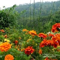 Indahnya bunga-bunga di kawasan wisata Coban Rais