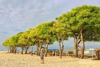 Pohon yang menghijau di Pulau Lae-Lae