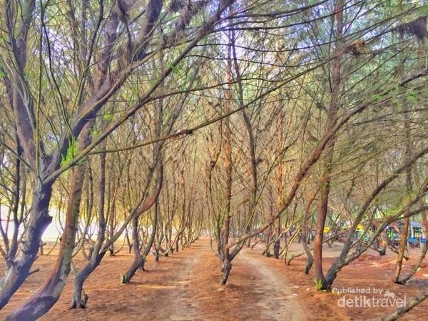 Cemoro Sewu, Spot instagramabel di Pantai Sine