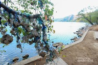 Pohon harapan yang ada di tepian danau Satonda