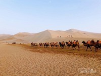 Iring-iringan unta di sepanjang gurun